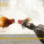 Cara Membuat Ayam Aduan Agar Kuat Bertahan Dipukul
