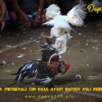 Cara Mengenali Ciri Khas Ayam Banten Asli Indonesia