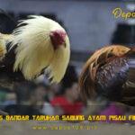 Situs Bandar Taruhan Sabung Ayam Pisau Filipina