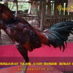 Langkah Menguatkan Tulang Ayam Bangkok Dengan Batu Kapur