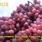Manfaat Pemberian Buah Anggur Pada Ayam Bangkok