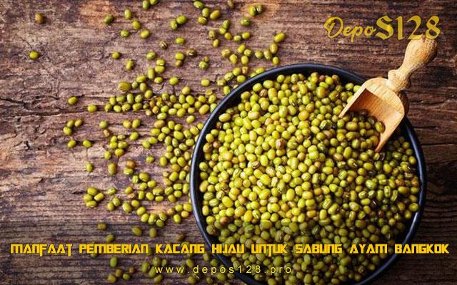 Manfaat Pemberian Kacang Hijau Untuk Sabung Ayam Bangkok