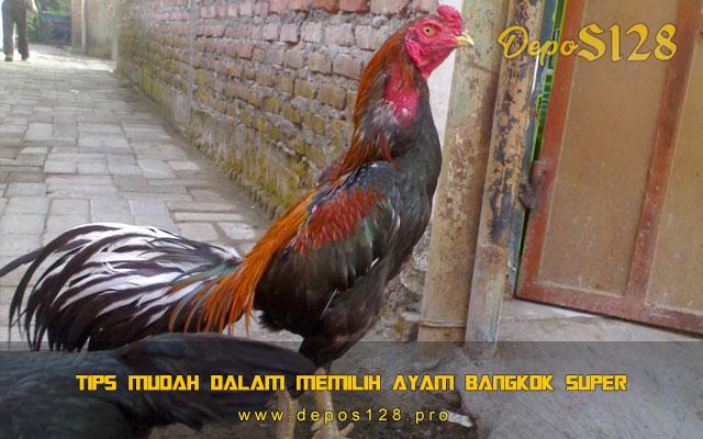 Tips Mudah Dalam Memilih Ayam Bangkok Super