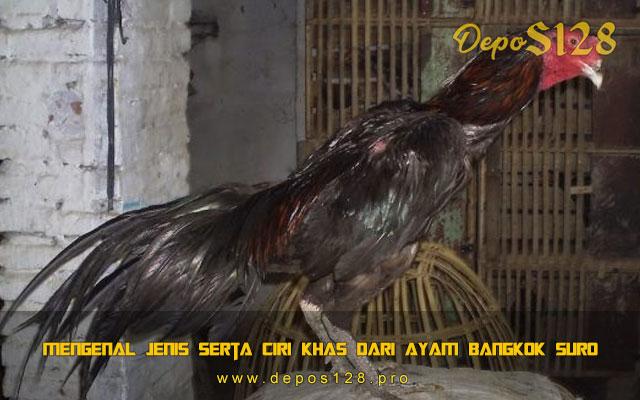 Mengenal Jenis Serta Ciri Khas Dari Ayam Bangkok Suro