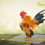 8 Jenis Ayam Hias Yang Populer Di Indonesia