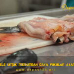 Daging Lele Untuk Menambah Daya Pukulan Ayam Aduan