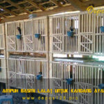 Panduan Ampuh Basmi Lalat Untuk Kandang Ayam Aduan